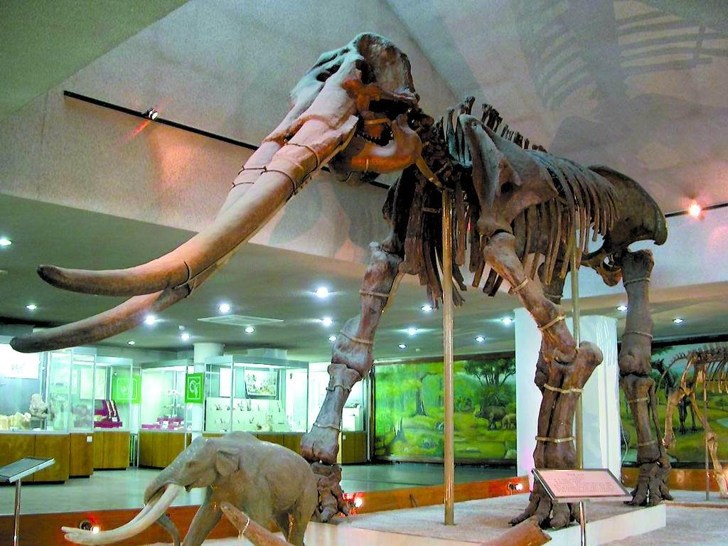 中国古博物馆——感受史前动物和古人类的自然遗存和