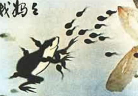 小蝌蚪成长过程 蝌蚪成长过程 小蝌蚪变青蛙成长图片 小-小蝌蚪长大